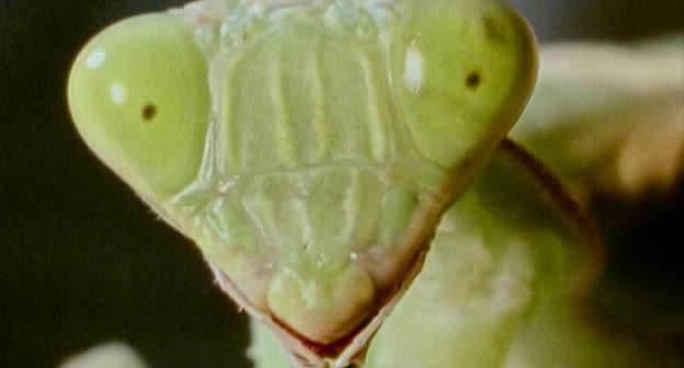 bug-mante-religieuse.jpg
